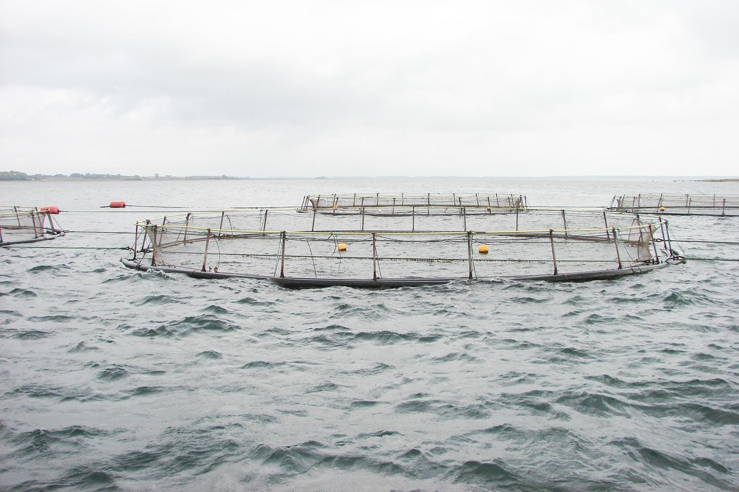 Even though food production in aquaculture is already sustainable, BioMar strives to further reduce the impacts on nature through constant development of our feeds.